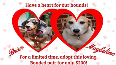 Adopt a Bonded Pair